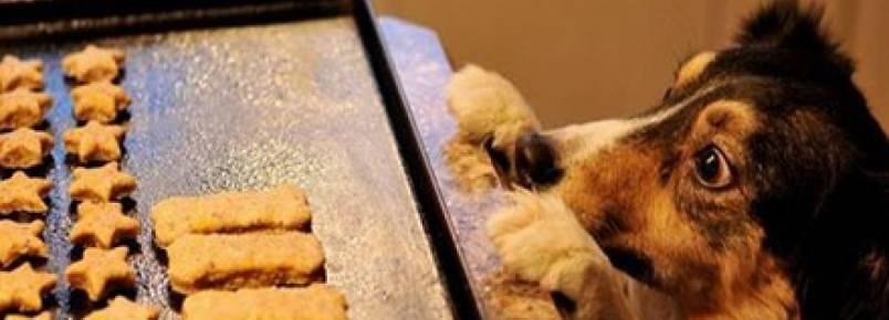 Faça em casa: biscoito saudável para cães
