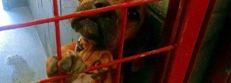 Cachorra é fotografada com lágrimas nos olhos em abrigo