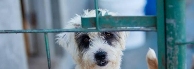 Para cuidar de animais abandonados, Abrigo São Lázaro recebe doações de R$ 5 em site de compra coletiva