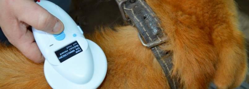Mais de 50 animais já foram adotados através do projeto 'Adote um Amigo'