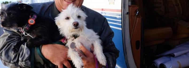 Pilotos voluntários salvam 12 mil cães que seriam sacrificados