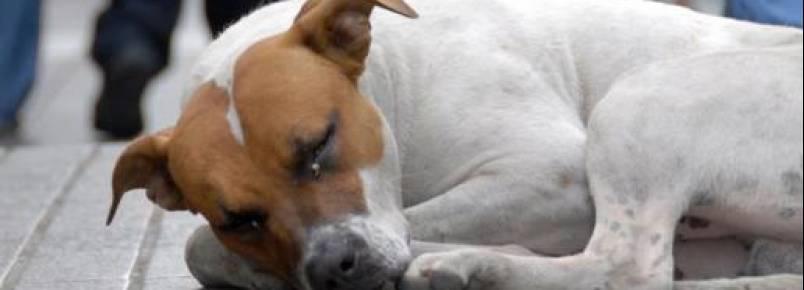 Prefeitura de Fortaleza cria programa com intuito de acabar com o abandono animal