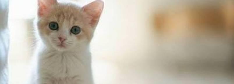 10 alimentos proibidos para os gatos