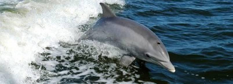 Operação de salvação de 11 golfinhos realizada com êxito no México
