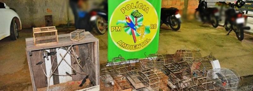 Polícia Ambiental apreende mais de cem pássaros silvestres