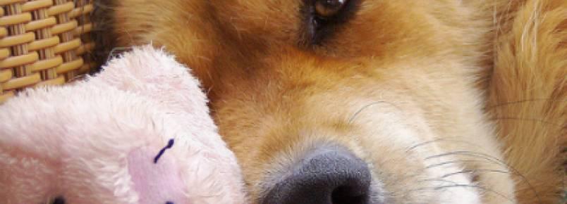 Conheça os tipos de cânceres mais comuns em cachorros