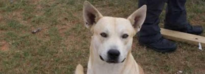 Traficante foge de polícia, mas seu cachorro o segue e homem é preso
