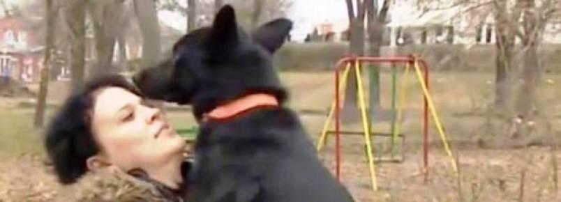 Cachorra percorre quase 300 km para encontrar mulher que ajudou em sua recuperação