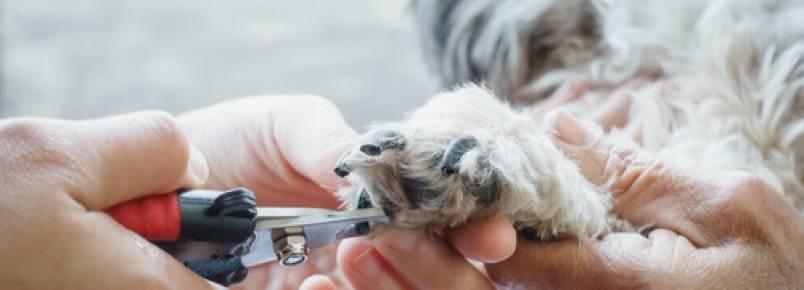 Como cortar as unhas de um cachorro de forma segura