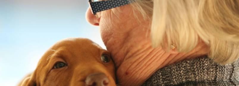 Pet ajuda no envelhecimento saudável, diz pesquisa
