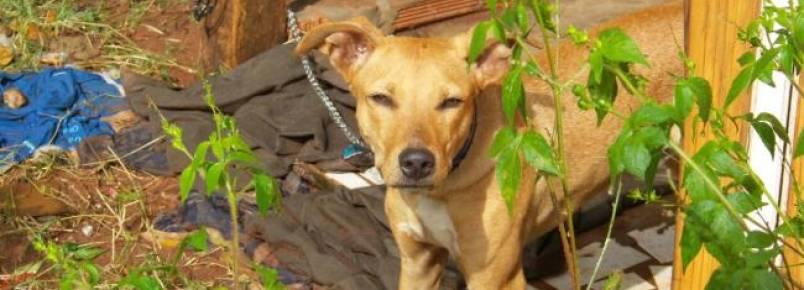 Cãozinho em situação de abandono mobiliza moradores da Vila Nascente