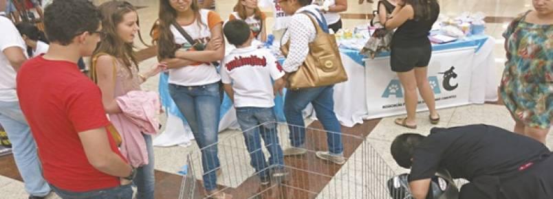 Projeto propaga a adoção de animais em Juazeiro do Norte