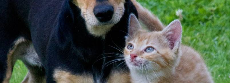 Assembleia terá CPI para investigar maus tratos aos animais