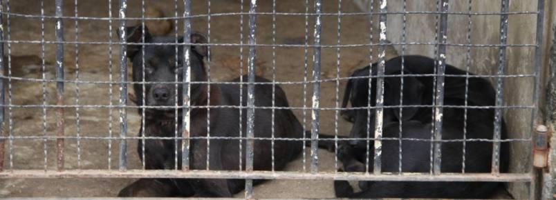 Mulher é acusada de abandonar cães