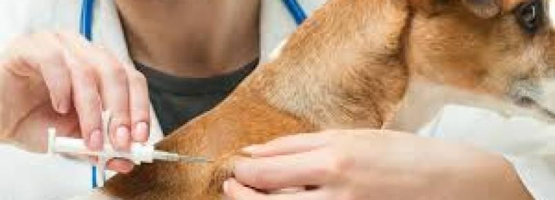 HIV: vacina experimental neutralizou mais de 30% dos vírus em animais, diz estudo
