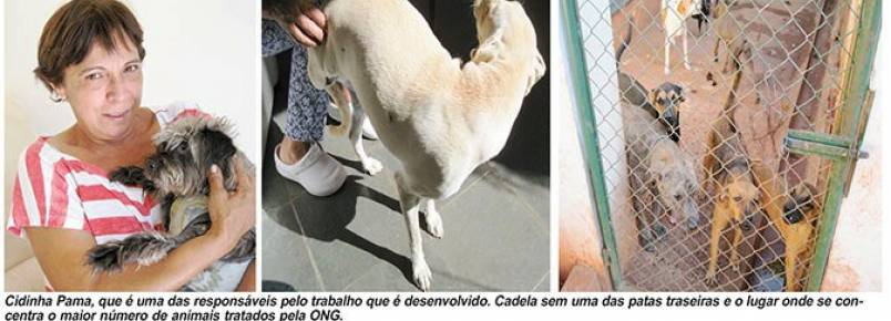 Em dificuldades ONG SOS Animais pede socorro para sobreviver