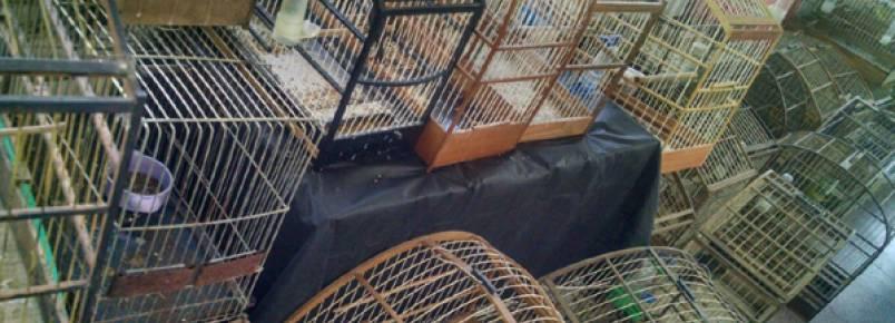 Polícia Ambiental apreende quase 80 aves silvestres em cativeiro em Colombo