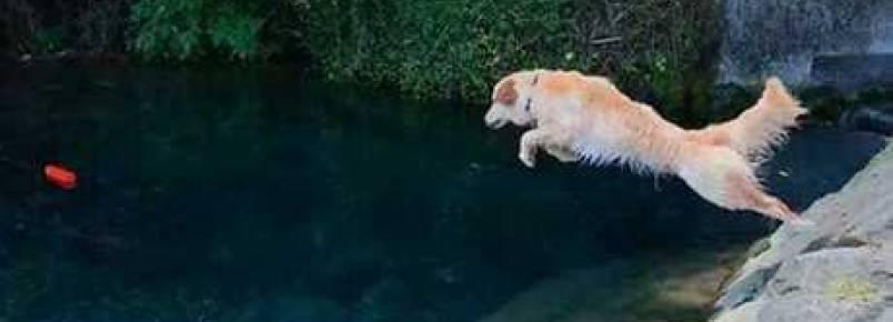 Cadela mergulhadora é hit na web com talento mais do que especial