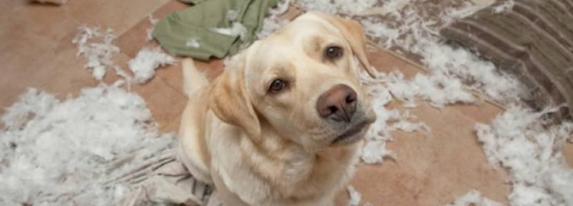 Desvende 5 sentimentos do seu cão