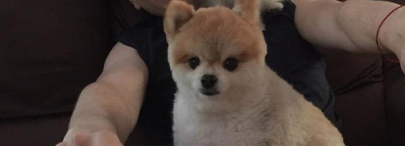 Tapioca, a cachorrinha de Celso Zucatelli, completa 1 ano de vida