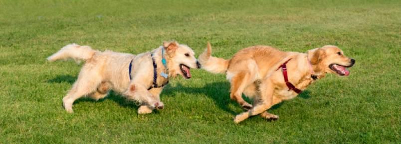 Creche para cães – O guia completo com tudo que você precisa saber
