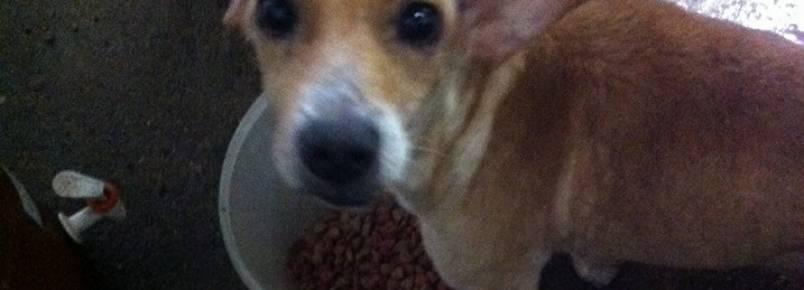 Grupo acha 26 cães abandonados em 2 casas