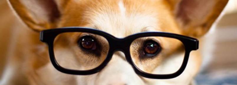 Veja como calcular o QI do seu cachorro