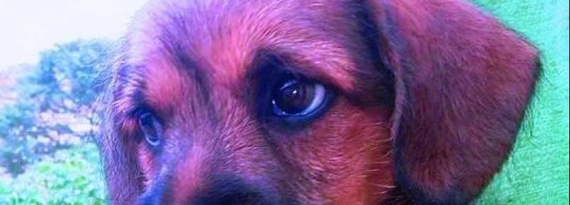 Kiara, uma linda cadelinha de Sta. Bárbara de Minas