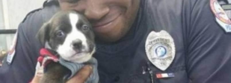 Durante investigação em abrigo de animais, policial adota filhotinho