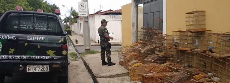 Idoso é preso com mais de 50 pássaros e pode pegar multa de R$ 26 mil