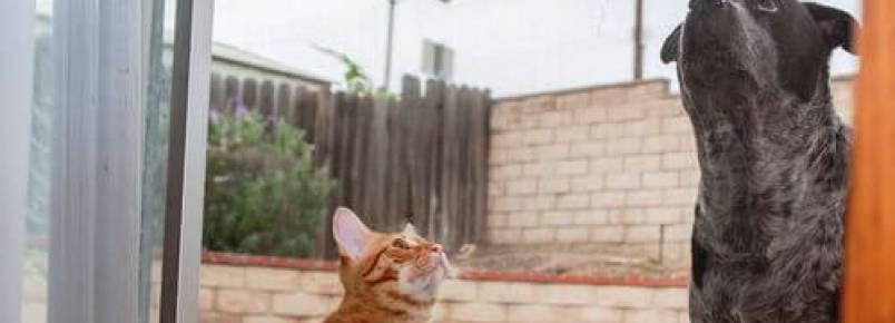 Os animais pressentem os terremotos?