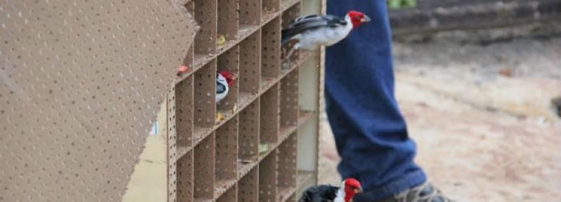 Liberdade: 244 aves presas ilegalmente voltam para a natureza