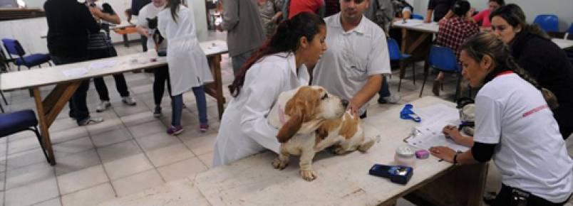 Cães são atendidos gratuitamente em Santa Felicidade (PR)