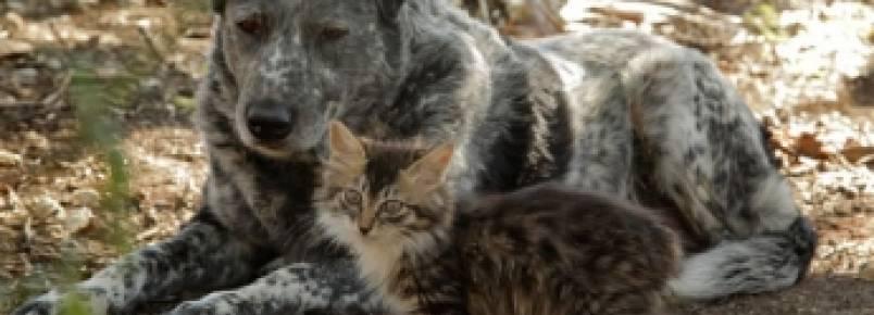 Cão mostra bom coração e adota gatinho com deficiência motora.
