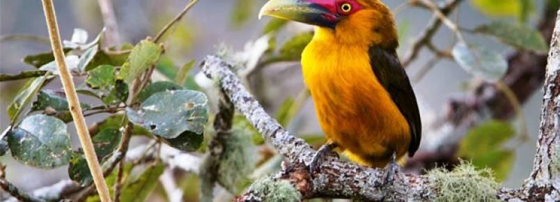 Reserva Mata do Passarinho evita a extinção de aves ameaçadas em Minas