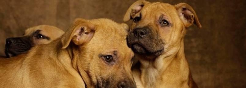 Fotógrafo luta para promover a adoção de animais de rua