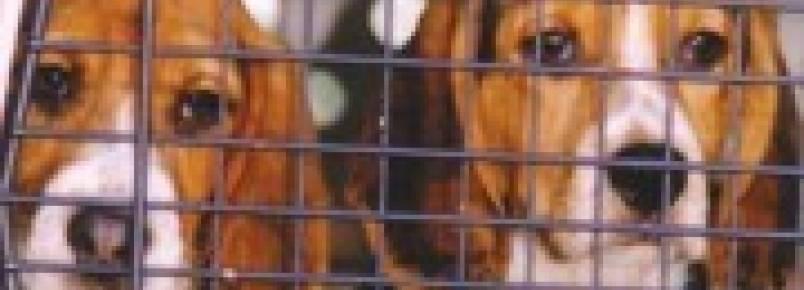 Desvirtuado Projeto de Lei de testes em animais