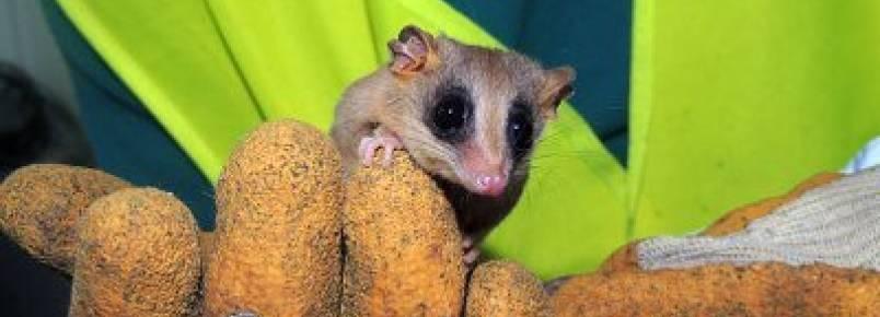 Projeto resgata 214 animais de área em obras da Raposo Tavares