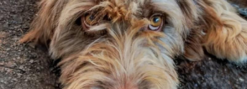 Feirinha de Adoção de Animais passa a ser realizada quinzenalmente