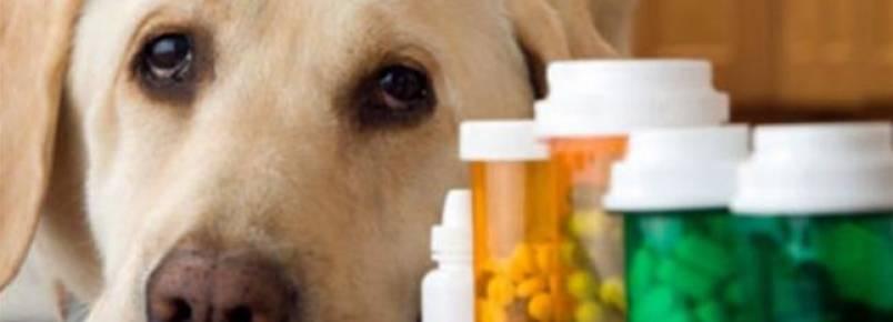 Remédios humanos proibidos para cães