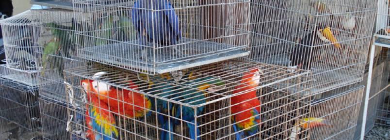 Ibama faz operação de combate ao tráfico de animais em redes sociais