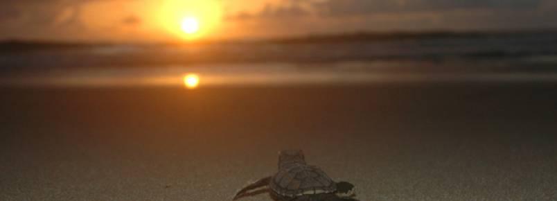 Hotéis de Porto de Galinhas (PE) ajudam na conservação de tartarugas marinhas