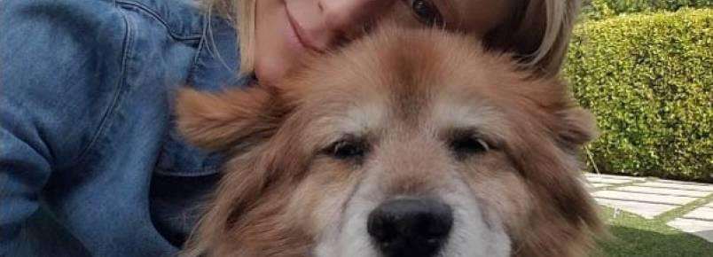 Atriz Kristen Bell explica o motivo que a fez adotar um cachorro