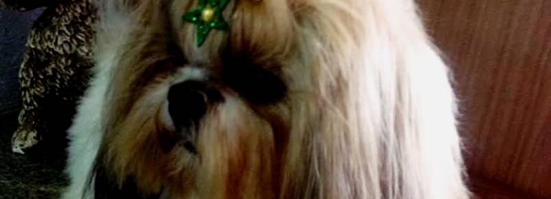 Leve seu cãozinho na Clinvet para ficar no clima da Copa do Mundo