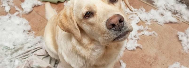 5 sinais de que seu cachorro está se sentindo solitário