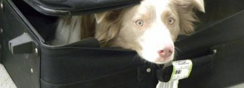 Tutor entra escondido em hospital com cadela para esposa em estado terminal poder se despedir