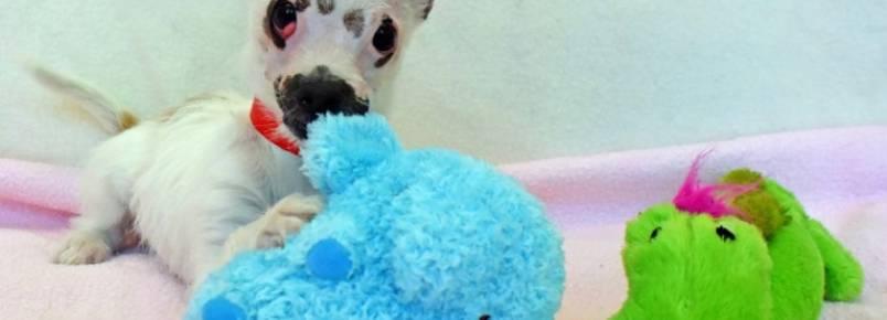 Cachorrinha com aparência diferente finalmente é adotada e recebe todo o amor do mundo