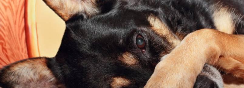 Cachorro com cheiro muito forte