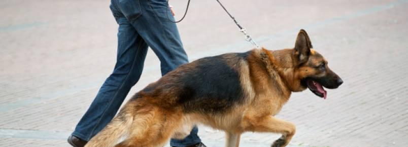 Dog Walker: A importância de ter um
