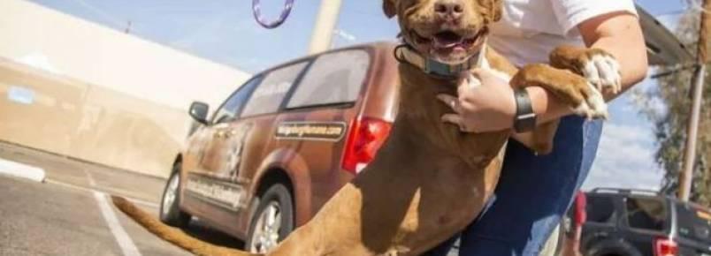 Cachorra é adotada após viver 400 dias em abrigo nos EUA